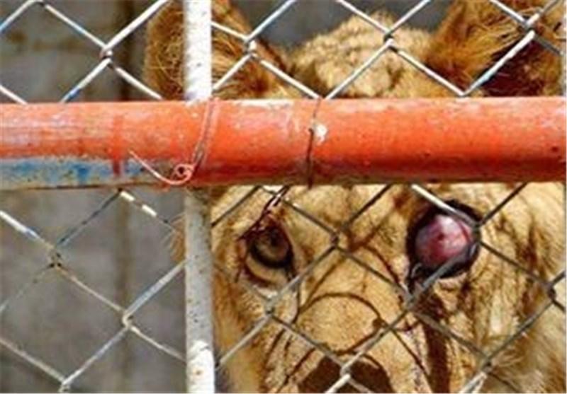 خط ممتد سکوت محیط زیست و حیواناتی که حبس ابد شدهاند