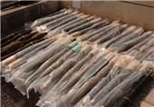 کشف سلاحهای ساخت رژیم صهیونیستی در ریف حماه/ پایان تخلیه غیرنظامیان از الفوعه و کفریا