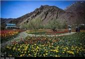 Gachsar Tulips Garden in Iran's Alborz