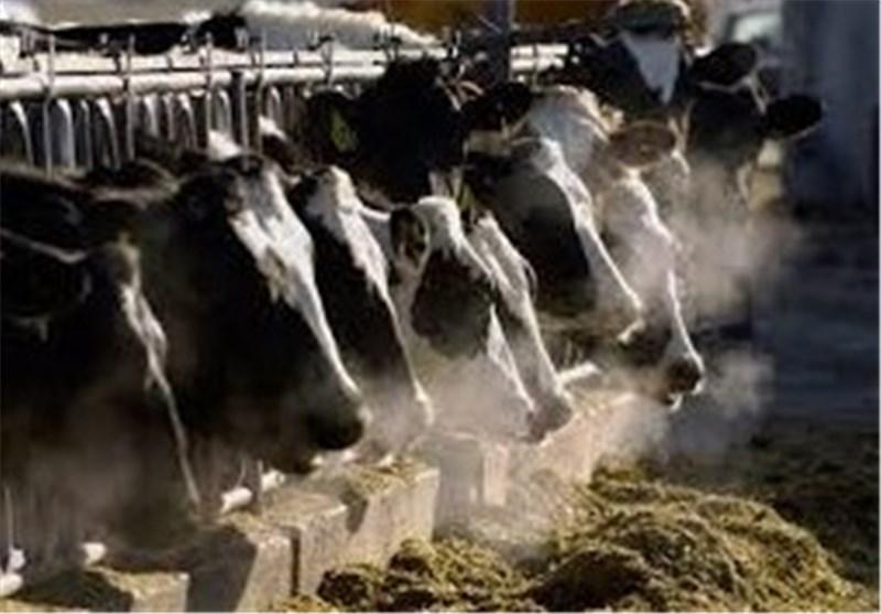 نوسان قیمت «نهادههای دامی» کارخانجات تولید خوراک دام گیلان را دچار مشکل کرد