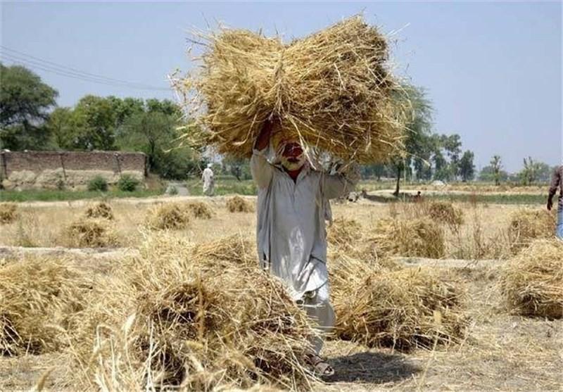 کشاورزی در پاکستان4