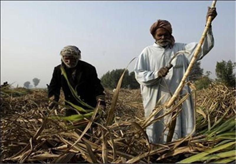کشاورزی در پاکستان10