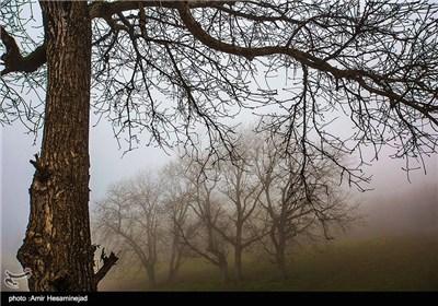 طبیعت بهاری شمال کشور