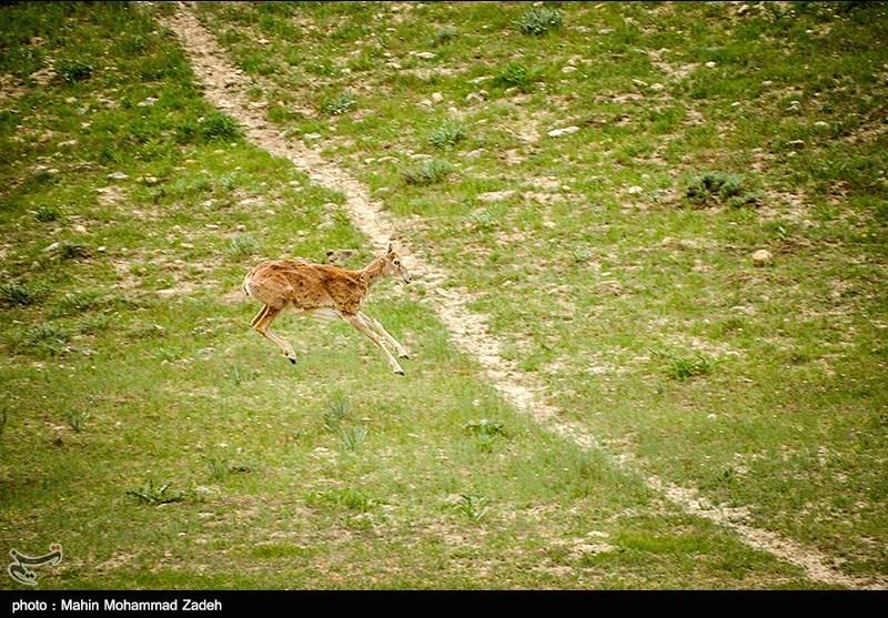 Bijar: A Protected Area in Iran's Kurdistan Province