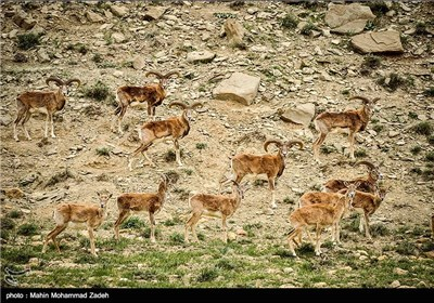 Iran's Beauties in Photos: Bijar Protected Zone
