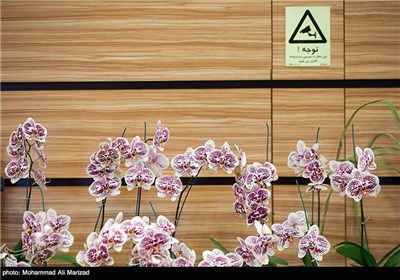 کانال تلگرام آموزش گل و گیاه