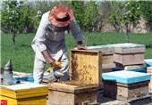 زنبورداری در هرات 8