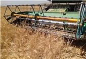 129 هزار تن گندم در استان بوشهر برداشت شد