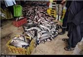 بازا ماهی فروش های اهواز
