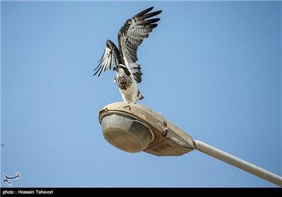 پرندگان جزیره ی کیش