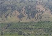 یاسوج  معارضات منطقهای مانع اجرای پروژه سد تنگ سرخ است