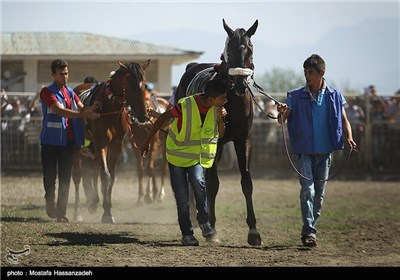 المرحلة الأخیرة من سباق الخیول فی کلستان