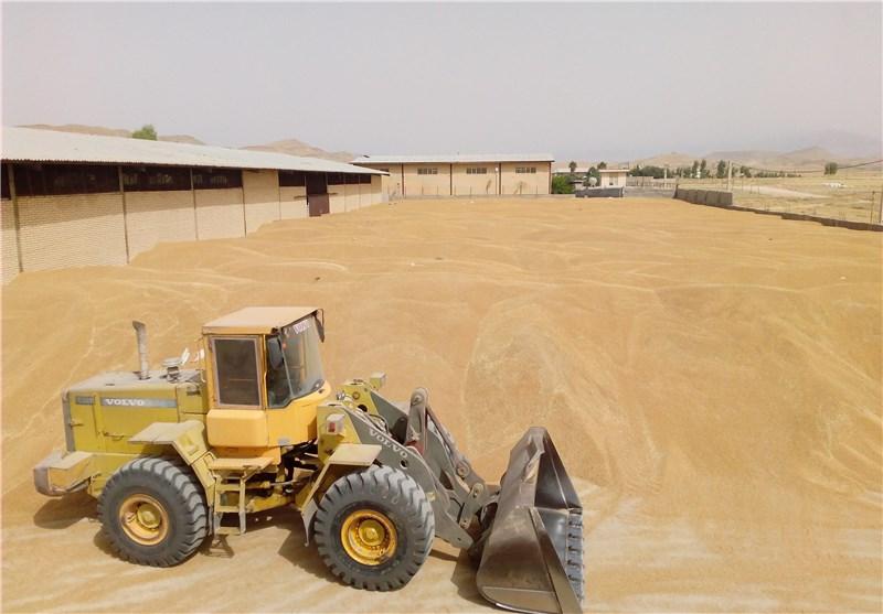 دست دلالان از چرخه خرید گندم در استان سمنان کوتاه شود