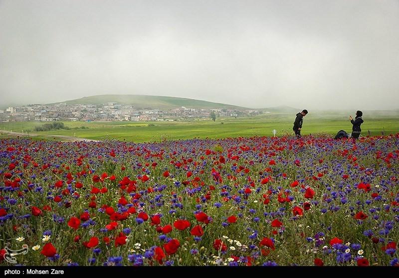 طبیعت بهاری اردبیل