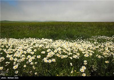 جمال الطبيعة في محافظة اردبيل