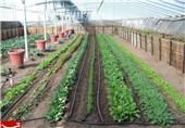 اختصاص 5 میلیارد تومان برای تکمیل زیرساختهای 8 مجتمع گلخانهای خراسان جنوبی