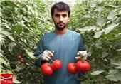 گلخانه در فراه افغانستان 10