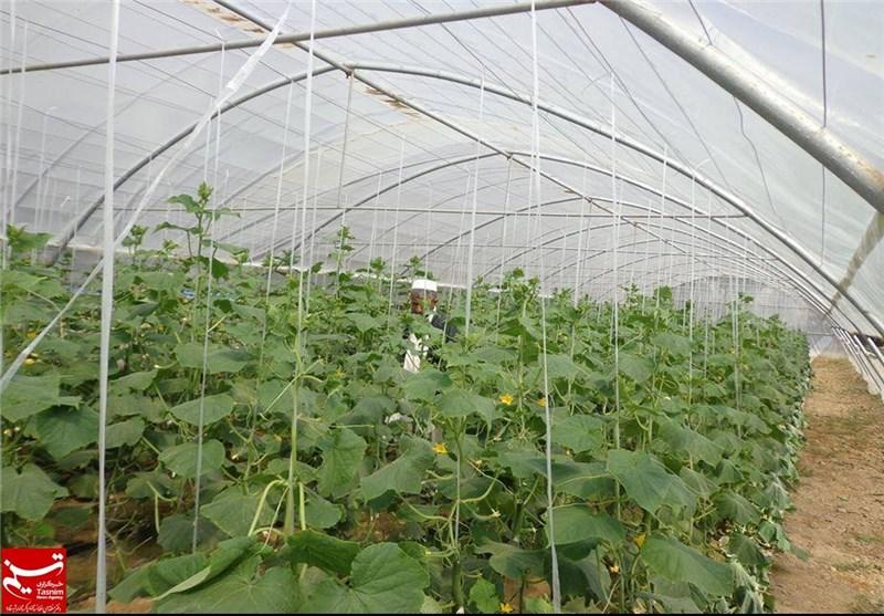 شهرک گلخانهای در لامرد راهاندازی میشود