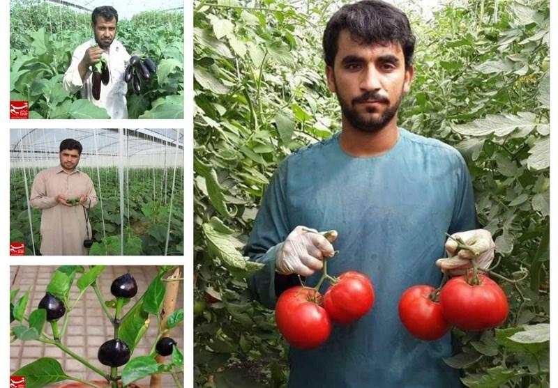 گلخانه فراه افغانستان