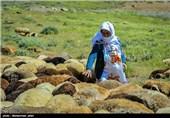 ورود اولین گروه عشایر به ارتفاعات زنجان