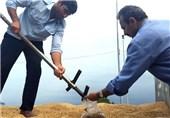 استاندار گلستان: 2300 میلیارد تومان از مطالبات کشاورزان پرداخت شد