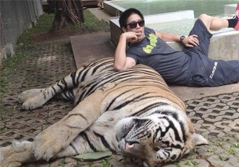 Dangerous Animal Rescue Bristol Big Cats