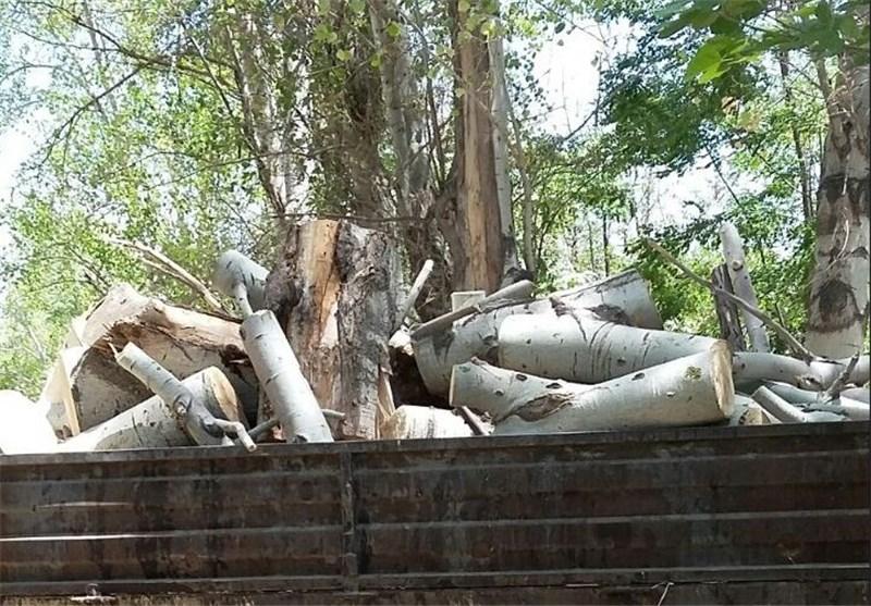 درختان آزادی