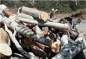 توضیحات معاون قالیباف درباره درختان قطع شده منطقه 22