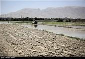 خشک سالی زاینده رود و آغاز نشاکاری در مبارکه اصفهان
