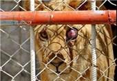 سازمان حفاظت محیط زیست، گونههای ارزشمند حیات وحش را روانه باغ وحش چاه نیمه زابل میکند
