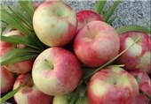 سیب گلاب طب سنتی