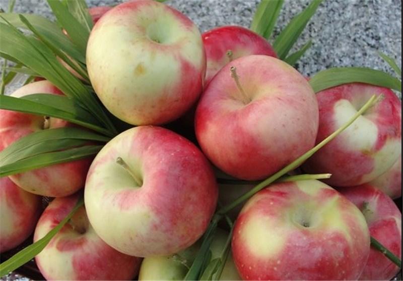 قیمت سیب نجومی شد + نرخ انواع میوه