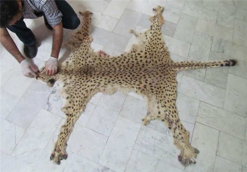 تشریح یوزپلنگ