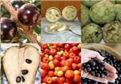 احتمال بیوتروریسم بودن انتشار جاروک در کشور/کشف 101 تن میوه قاچاق در یک هفته گذشته