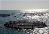 تولید ماهی در قفس