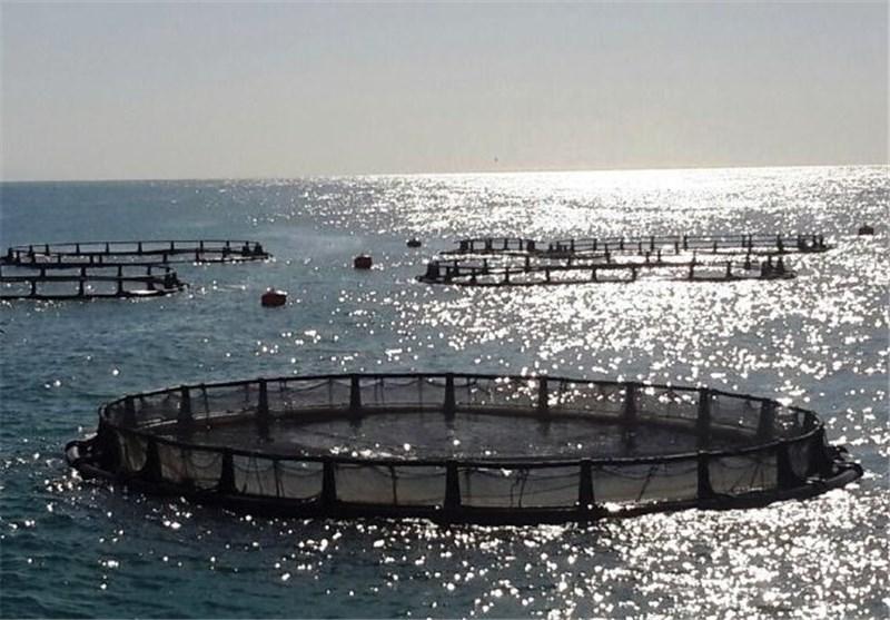 بوشهر|میزان تولید پرورش ماهی در قفس در استان بوشهر به 4000 تن میرسد