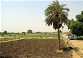 اراضی کشاورزی آفریقا