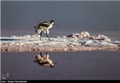 سرخی دریاچه ارومیه