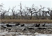 تهدید محیط زیست در نتیجه خشکسالی