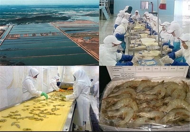 صادرات آبزیان در استان بوشهر 51 درصد افزایش یافت