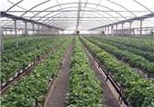 4 میلیارد متر مکعب آب کشاورزی با توسعه گلخانه ها صرفه جویی میشود
