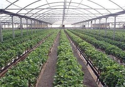 40 هکتار گلخانه تا پایان سال در خراسان رضوی تأسیس میشود