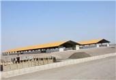 اعطای وام های خود اشتغالی به فعالیت های دامپروری در قلعه گنج