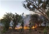 آتش سوزی جنگل اندیمشک 1
