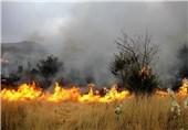 آتش سوزی های مشکوک مزارع گندم عراق را نابود میکند
