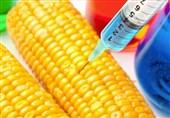 وزارت کشاورزی بهعنوان مدعی به مسئله «تراریخته» ورود کند