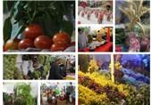 نمایشگاه محصولات کشاورزی هرات