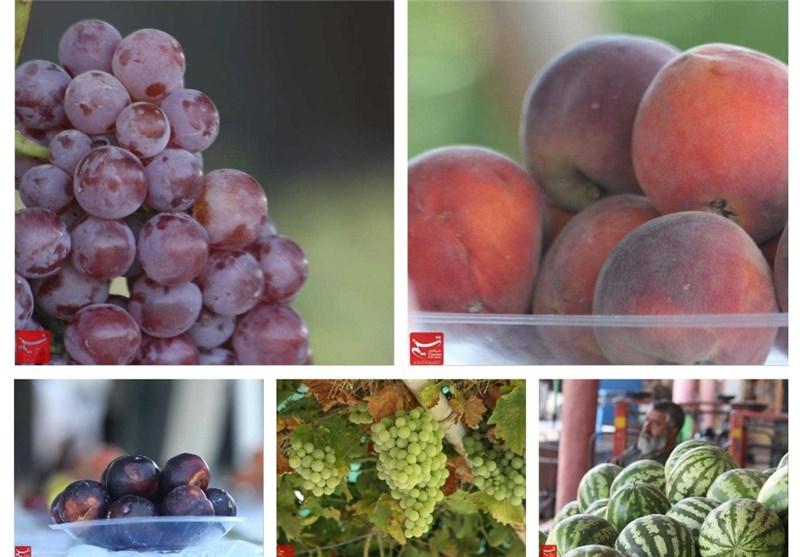 میوه در غرب افغانستان