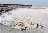 عکس محمد آقایی پر از دریاچه ارومیه