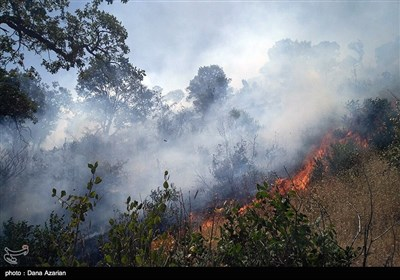 Wildfire Hits Woods West of Iran